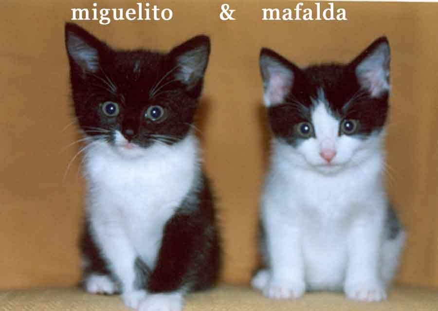 Mafalda y Miguelito, rescatados de un hogar por Luci en el Norte de Inglaterra