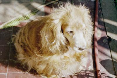 Mi hermosa Lola, que no pudo venir a Londres con nosotros debido a la cuarentena de 6 meses que tendria que pasar en una jaula para controles. Todavia en UK no consideran a nuestros animalitos miembros de la familia.